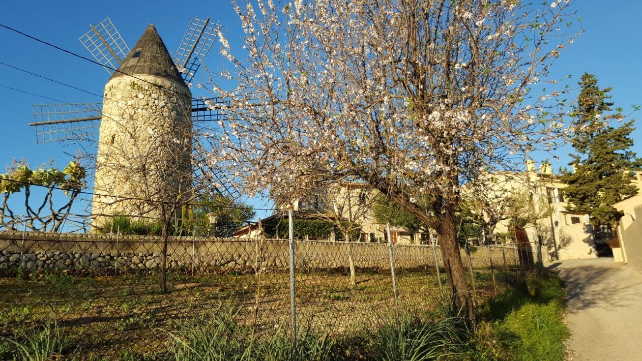 property for sale in Campanet Mallorca